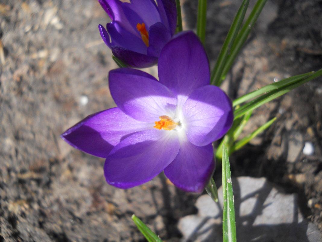 Вот и весна пришла - Галина