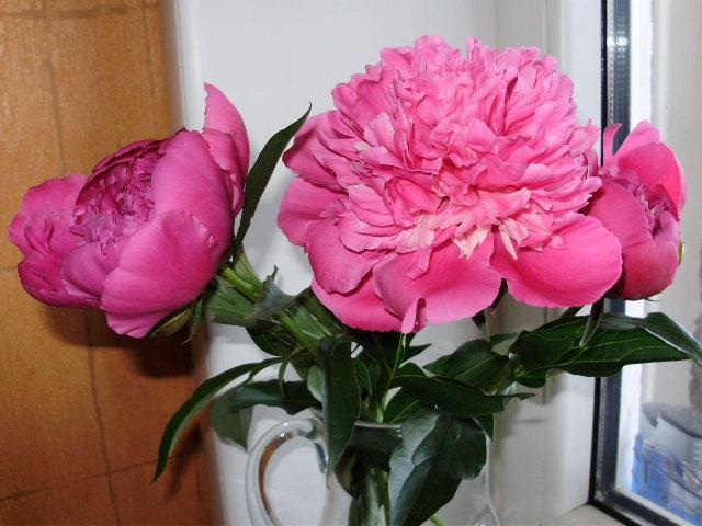 Дачные цветочки - Светлана Z.