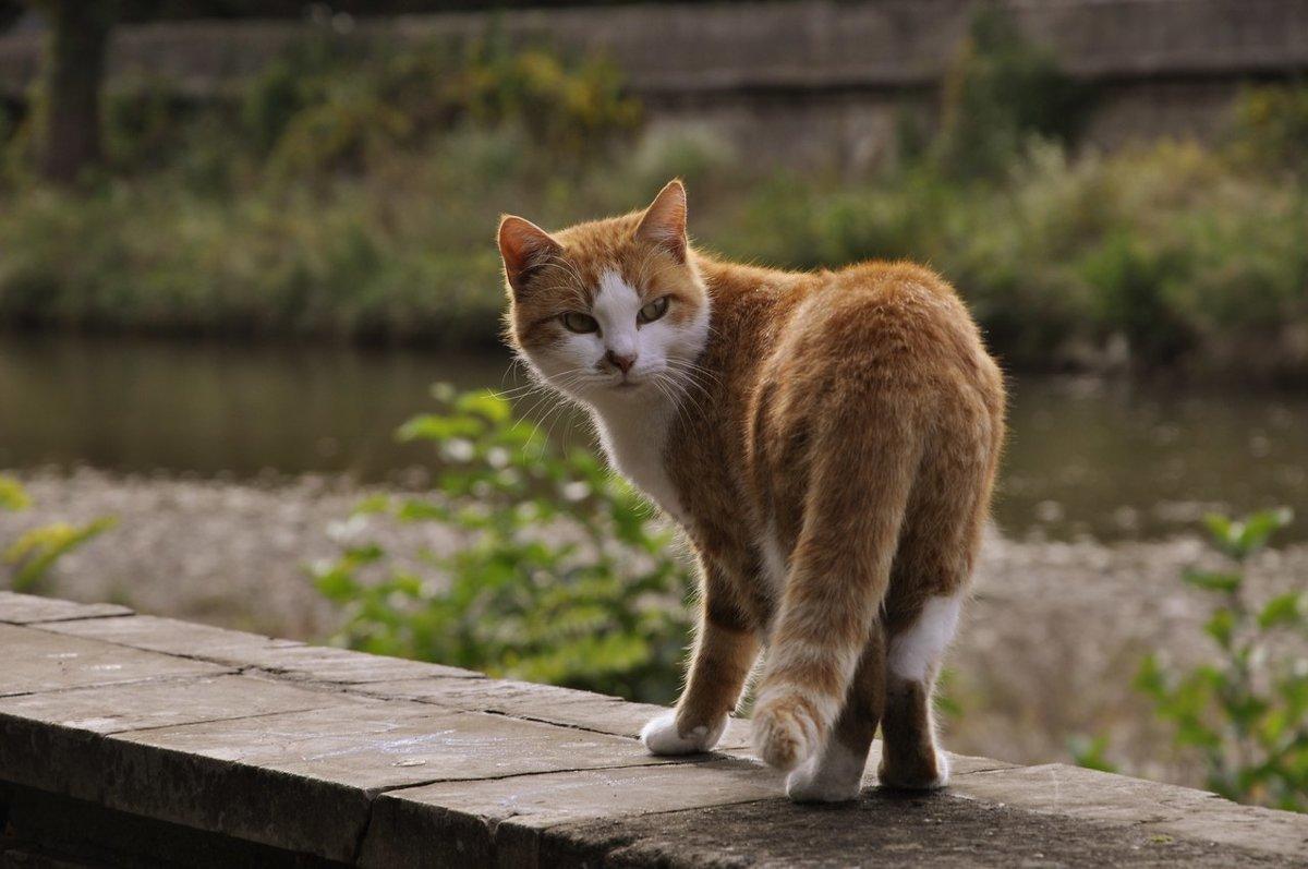 котик на море - Наталья Ariadafhotostory
