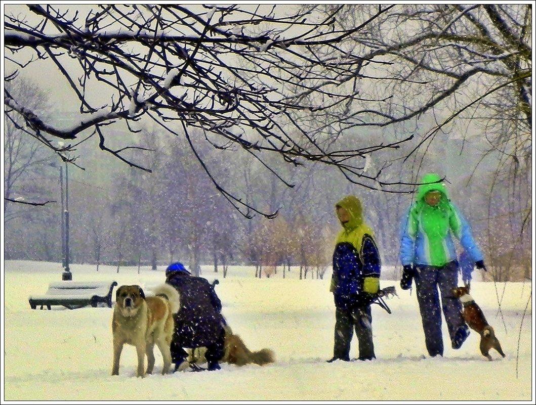 Снегопад - Анатолий Цыганок