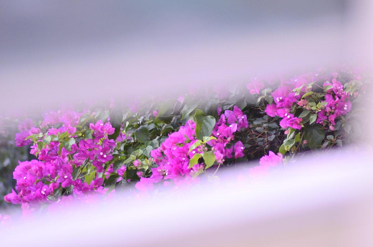 Цветы - Svetlana Erashchenkova