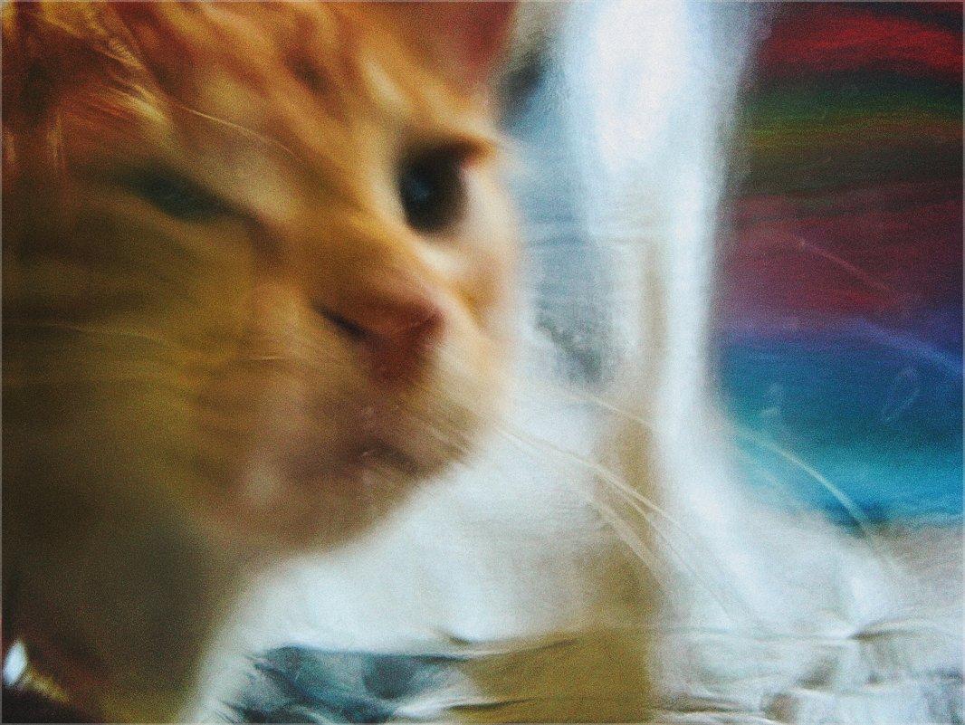 Кошачьи сны. - Вера Катан