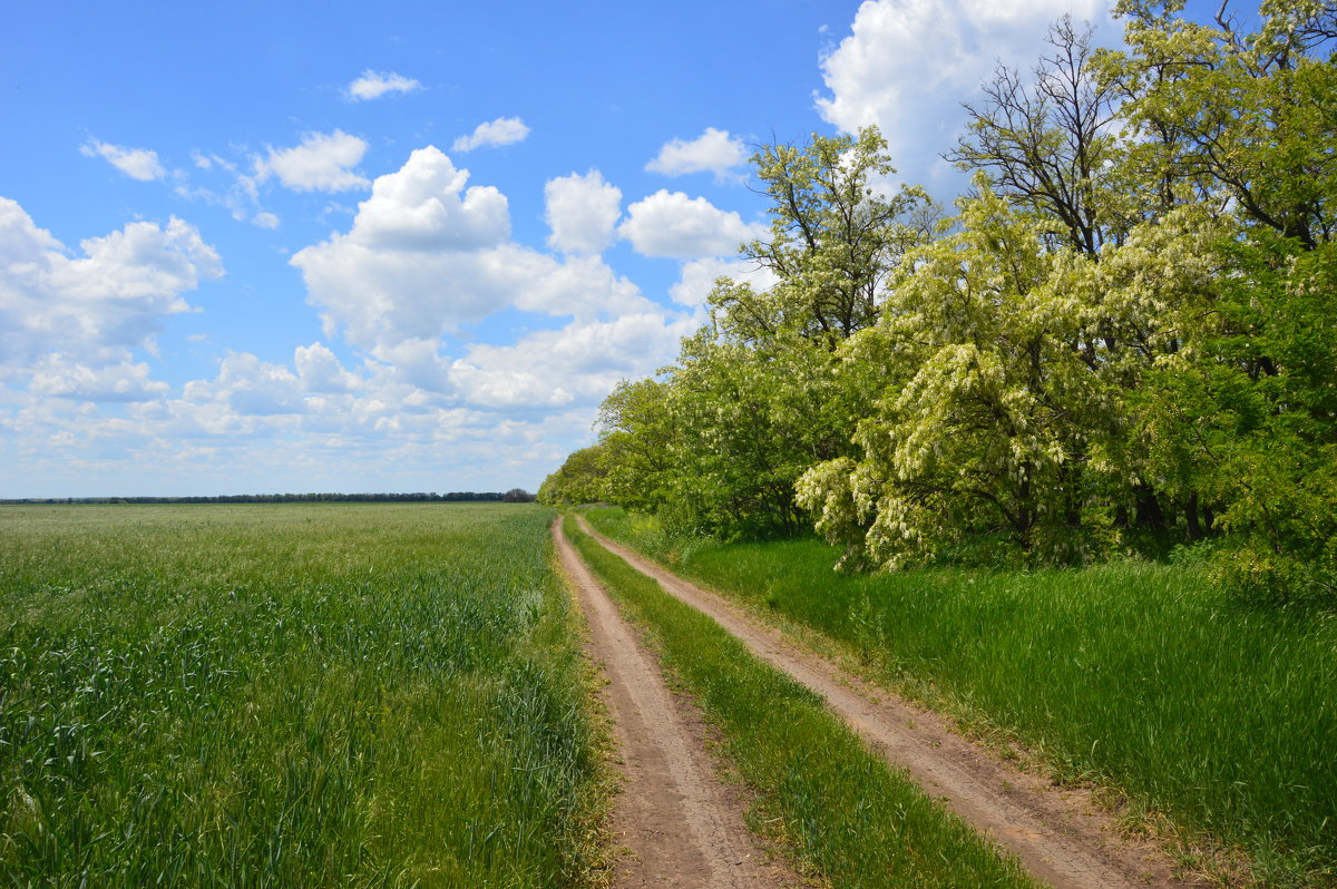 Весна. Мои дороги. - Виктор