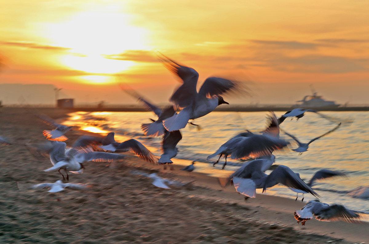 Азовские чайки! - Vladimir Didenko