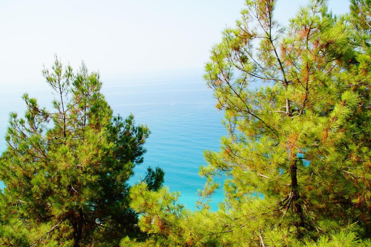 Море и сосны - Lersa