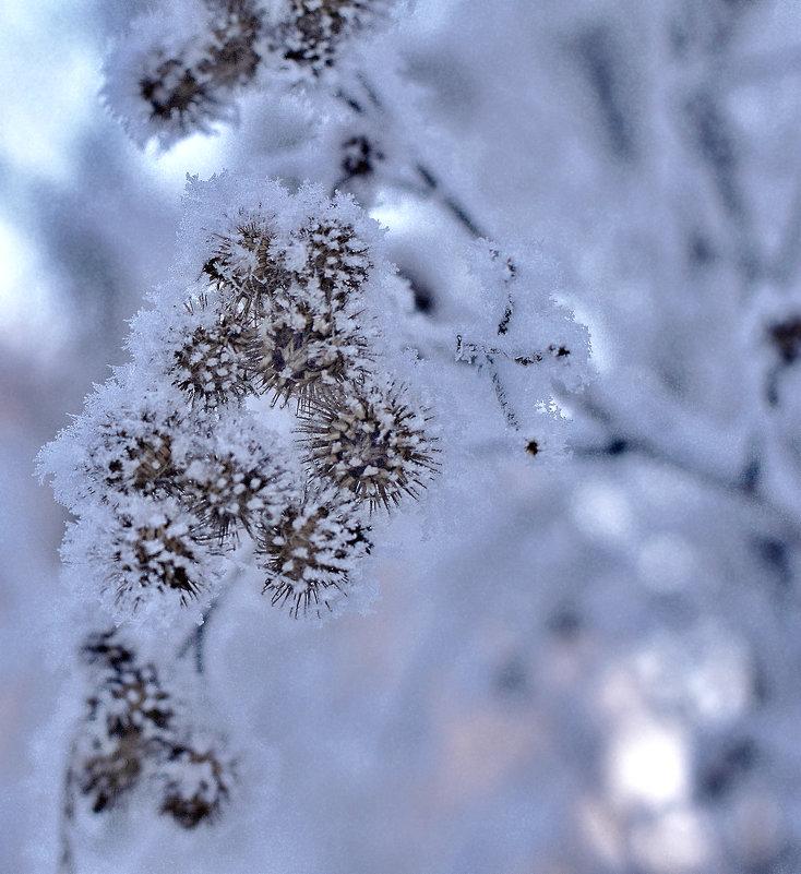 ......снежные   ежики..... - Георгий Никонов