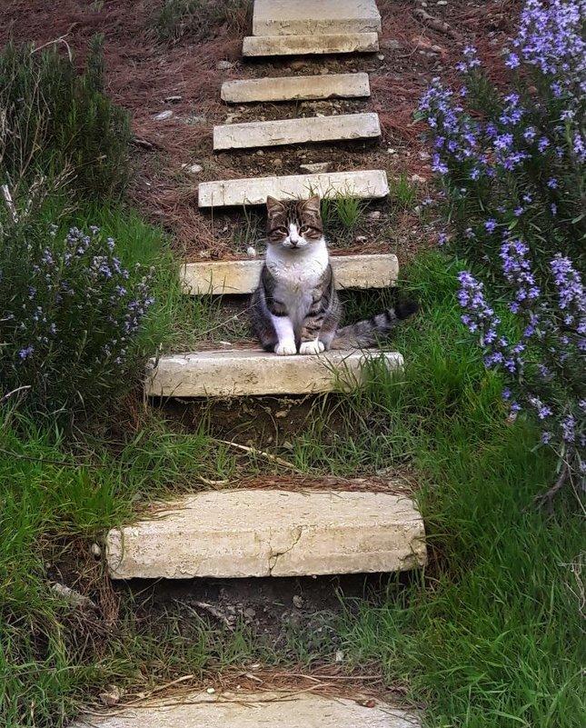 Мартовский кот - Natka Корнева