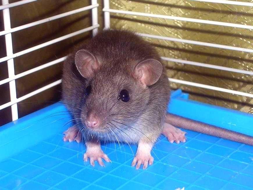 Маленький испуганный мышонок - Ирина Via