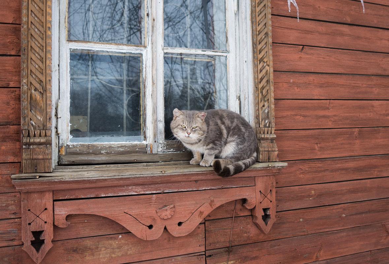 Тошка на окошке ))) - Андрей Зайцев