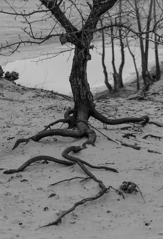 То ли корни,то ли нервы,то ли змеи.Это уж как кто видит. - Стас