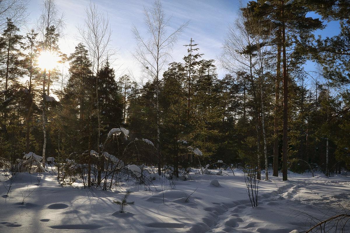 С весенним солнцем - Алексей (GraAl)