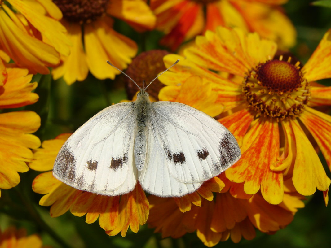 В цветочных владениях - SELENA4950