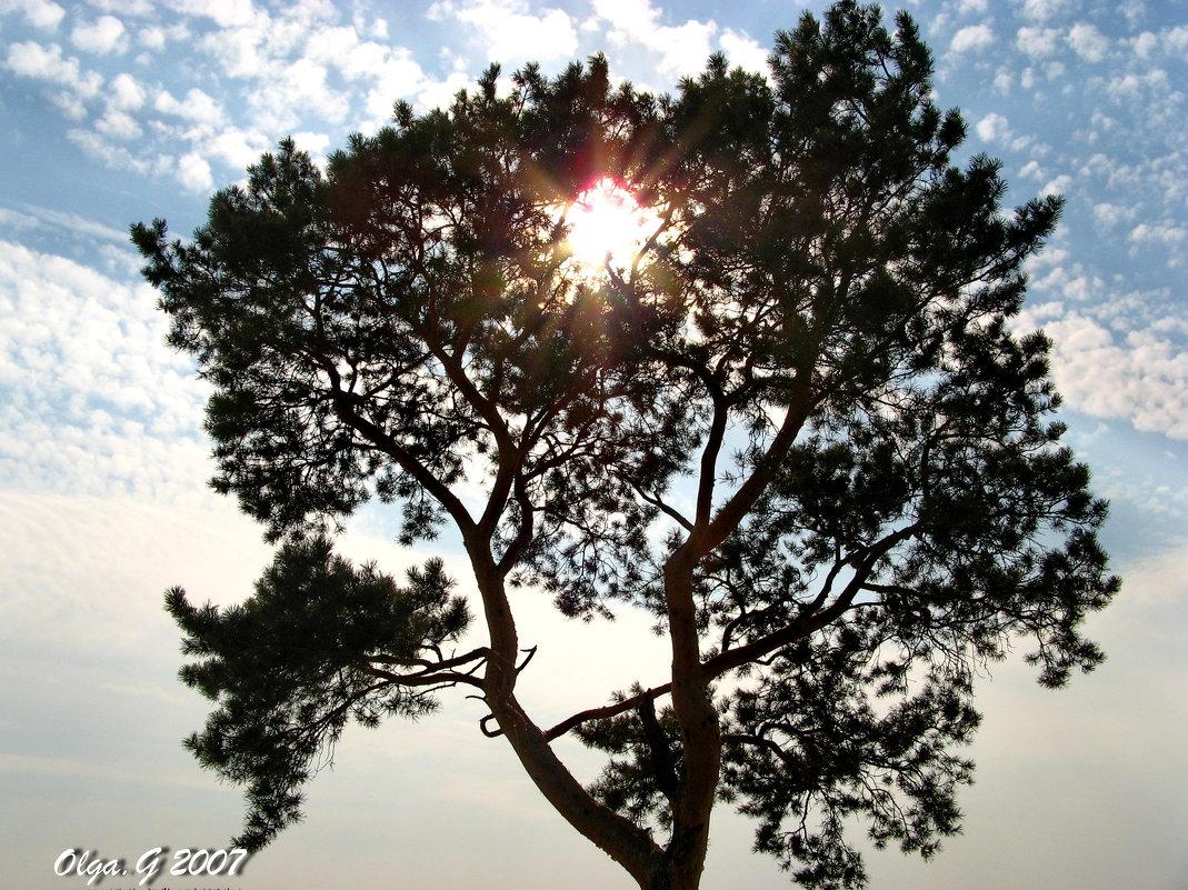 Дерево - OLLES