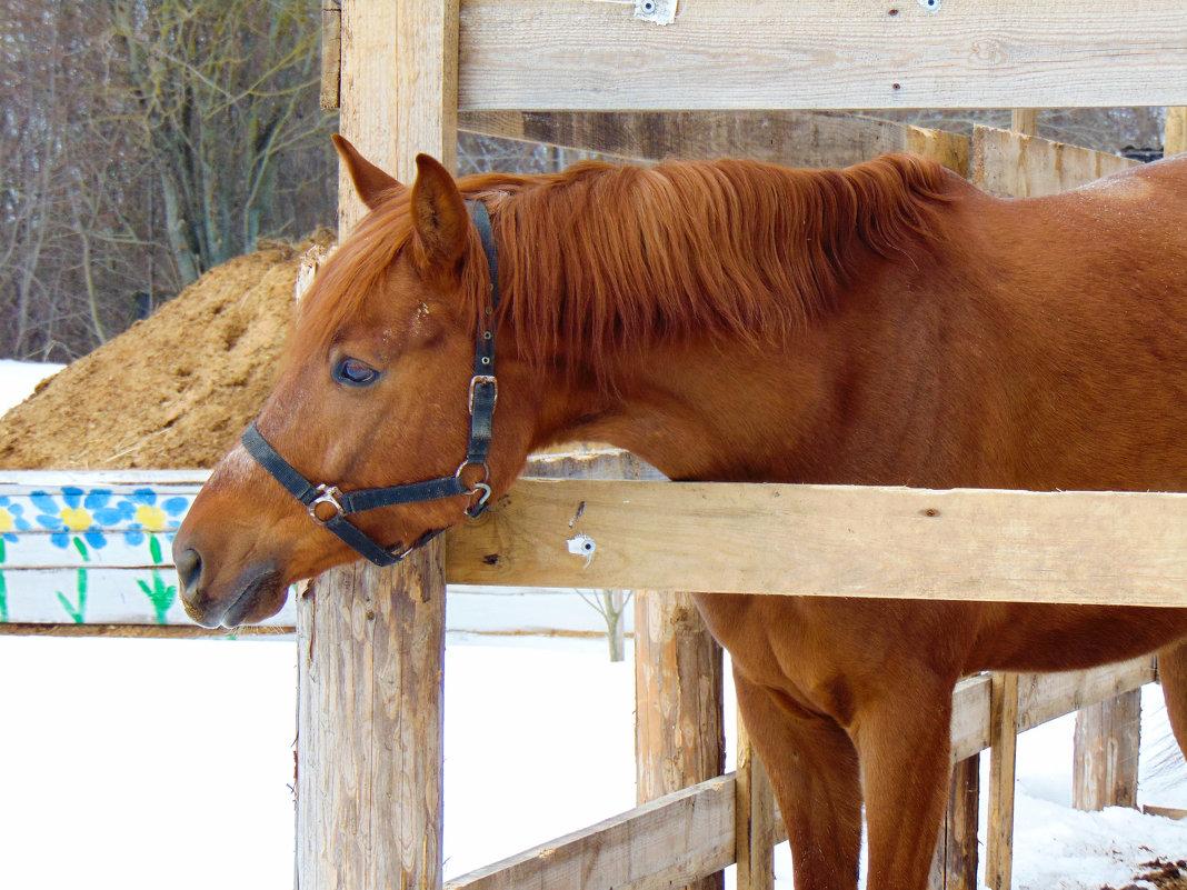 Любопытная лошадь - Юлия Ошуркова