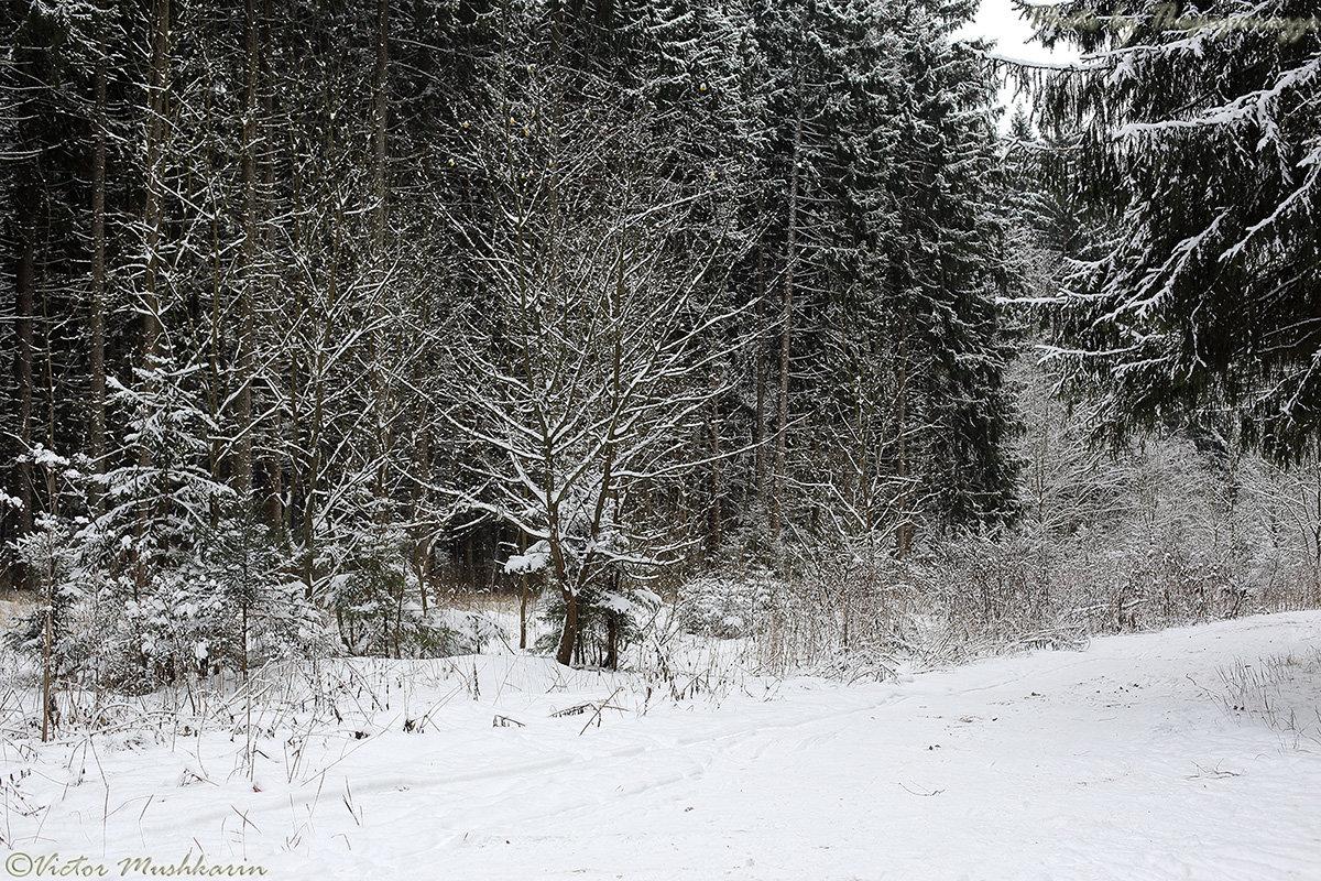Зимний лес (4750) - Виктор Мушкарин (thepaparazzo)