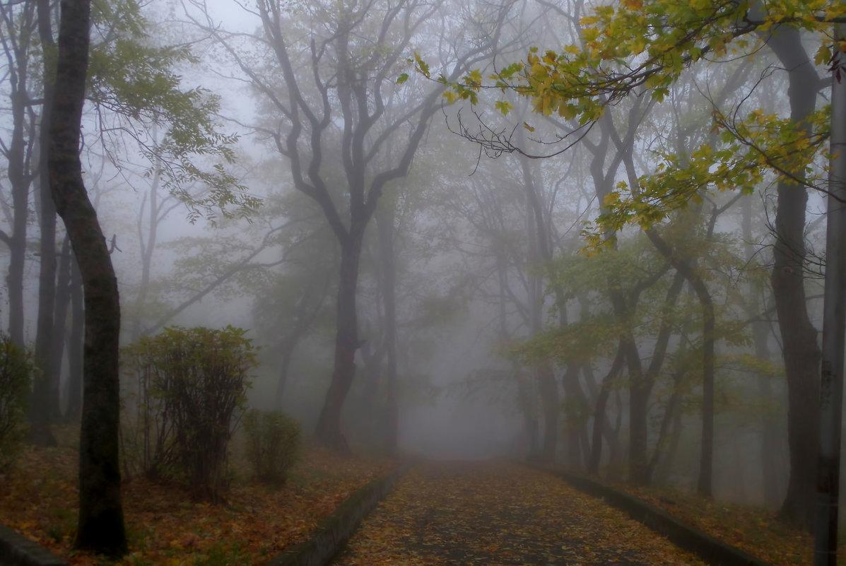 В парке туманном.... - Юрий Цыплятников