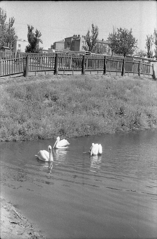 Харьков, зоопарк. 1963 - Олег Афанасьевич Сергеев
