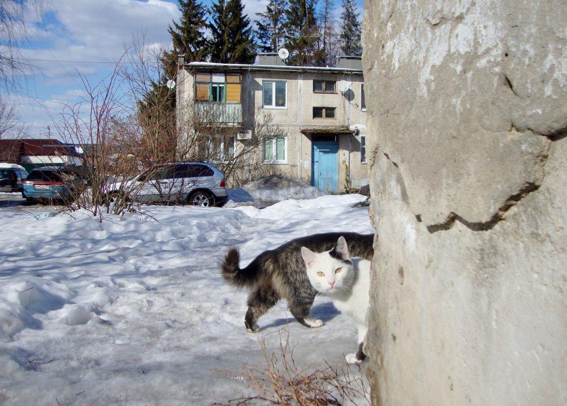две половинки разных кошек... - Галина Филоросс