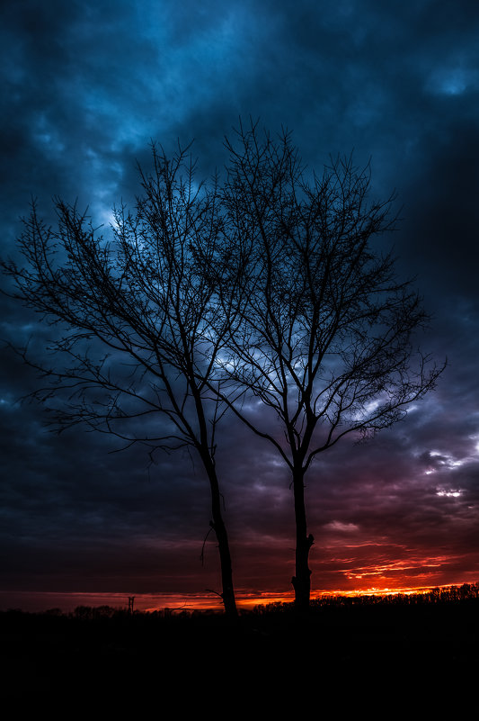 Деревья на закате - Sergiy Korkulenko