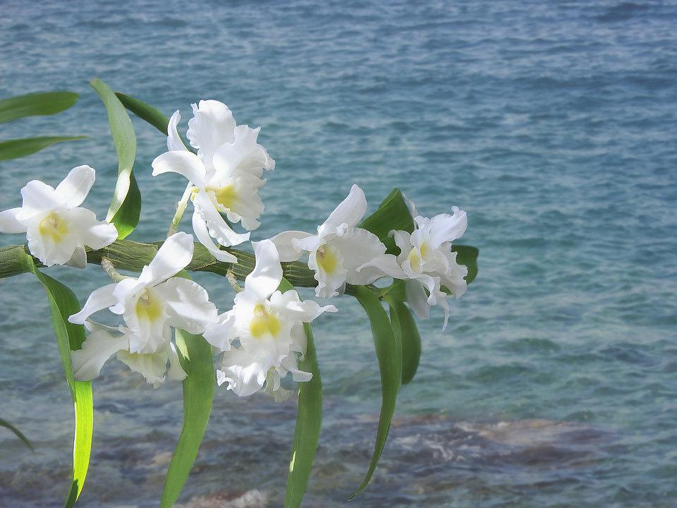 Орхидея и море - Ирина Приходько