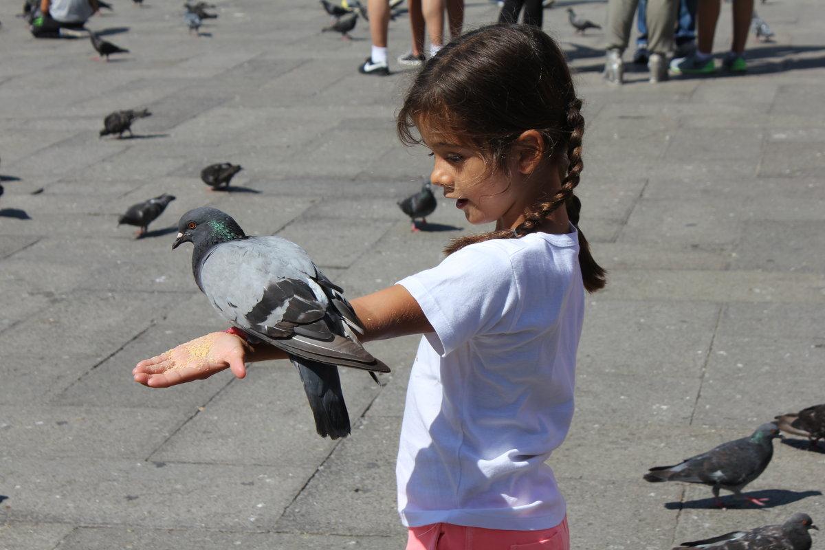 Девочка, кормящая голубей - Вячеслав Маслов