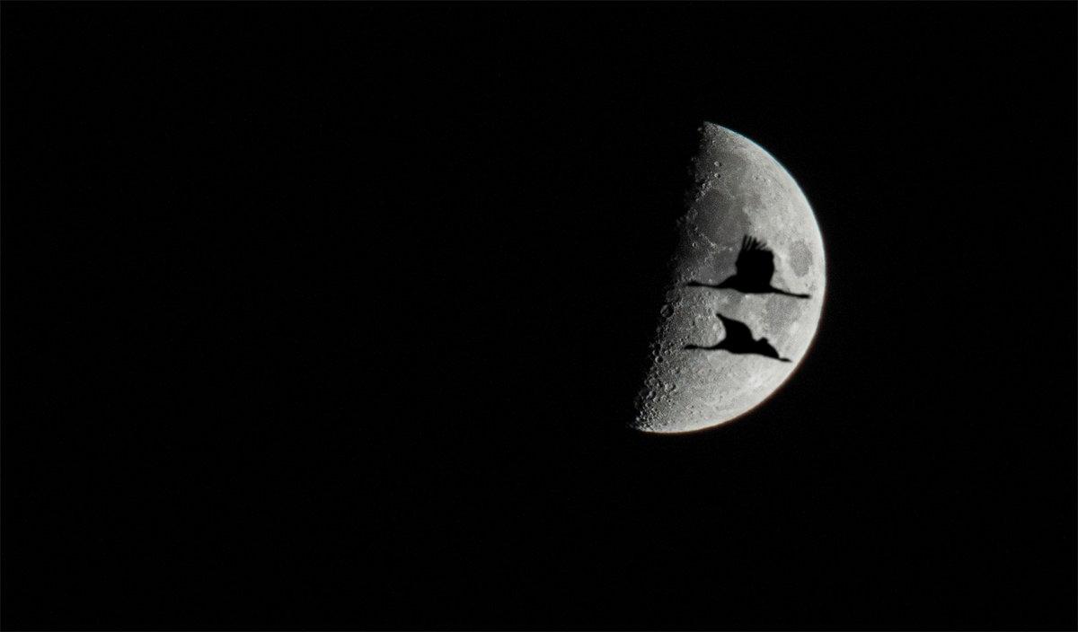 Ночной полёт - Анатолий Клепешнёв