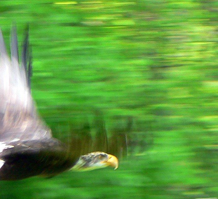 Полет орла - vitper per