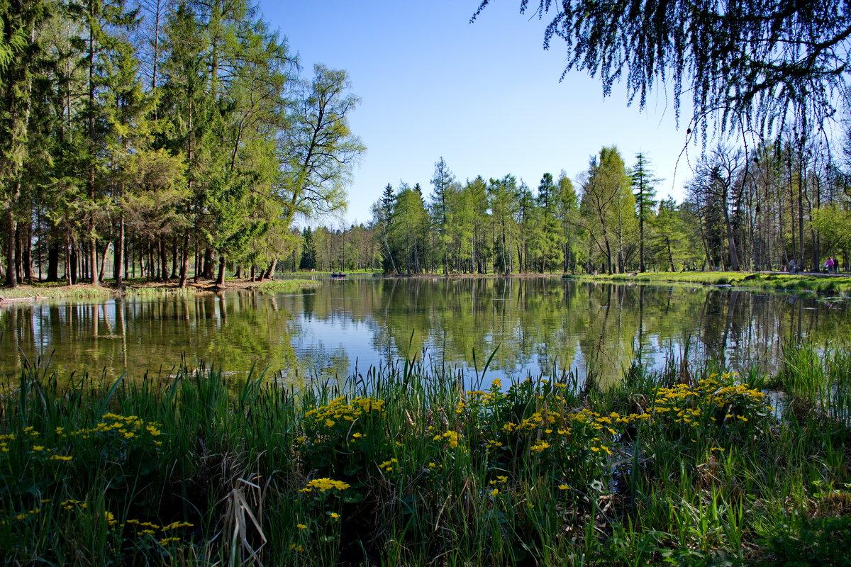на серебряном озере   ... тишина... - Валентина Папилова