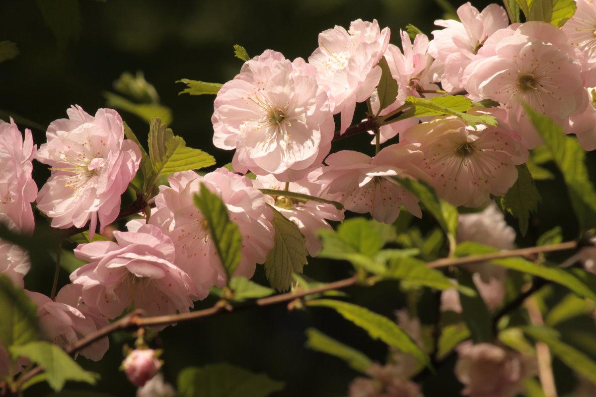 Весна в Аптекарском огороде... - mirtine