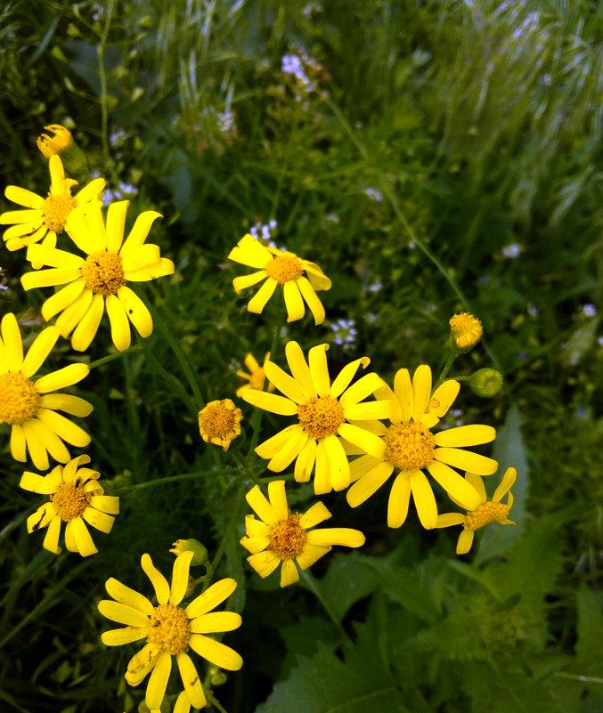 Весенние цветы - Татьяна Королёва