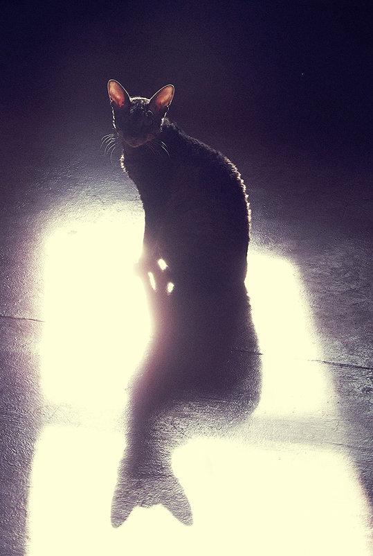отражение света тень - Лера