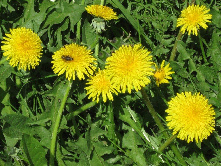 Пчёлка на цветке - Дмитрий Никитин