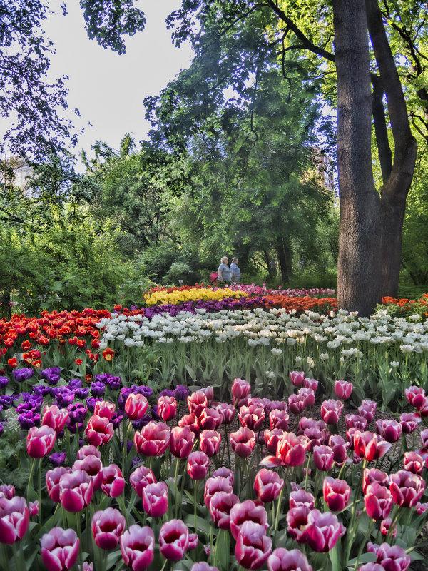 Весна в Аптекарском - marmorozov Морозова