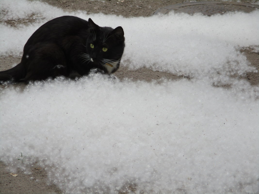 Жизнь в пуху - купание чёрного кота!!!... - Алекс Аро Аро