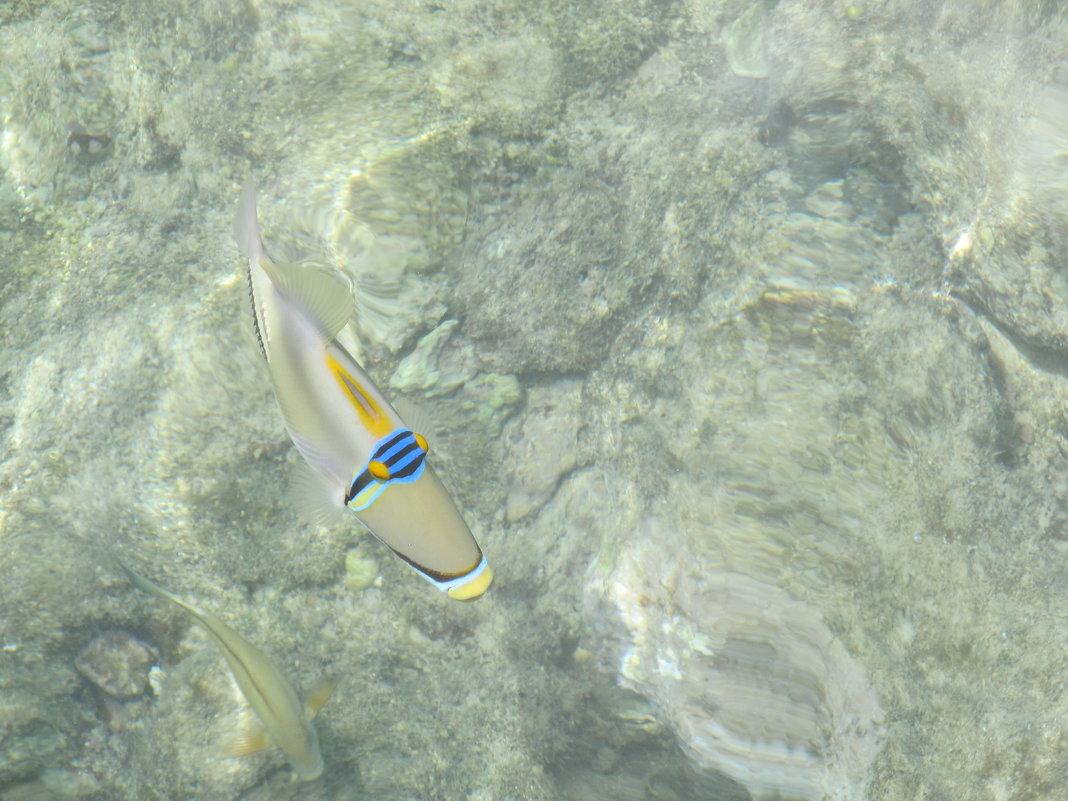 Рыбки Красного моря,Египет - tgtyjdrf