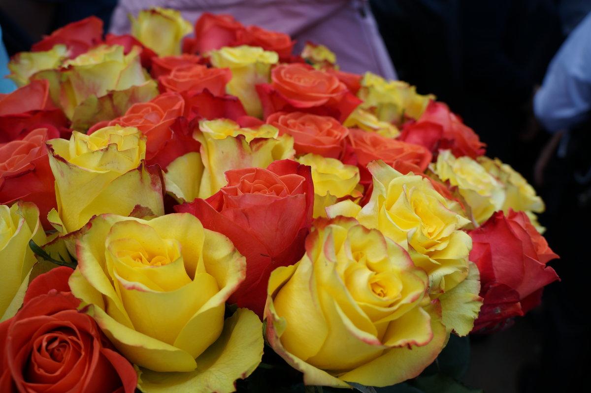 Букет роз - Алёна Савина