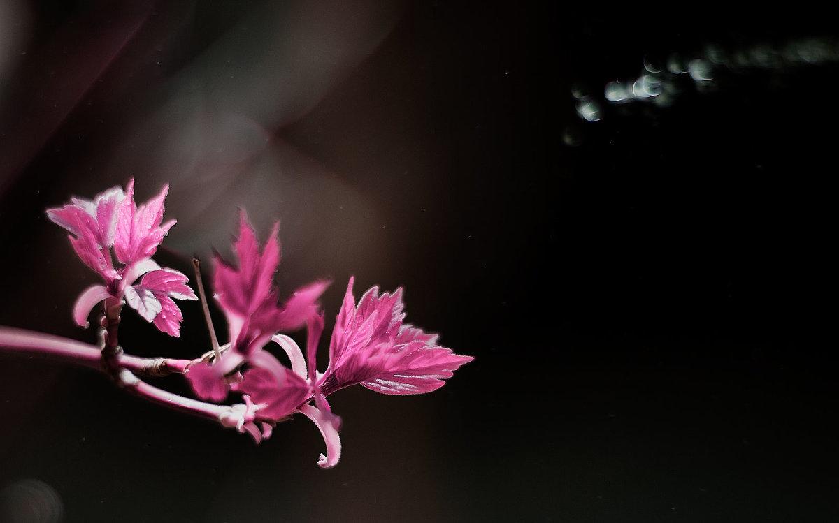 Розовая весна - Наталья Новикова
