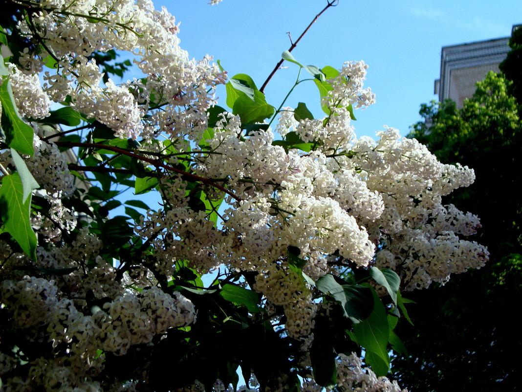 Весь двор цветёт - Marina Bernackaya Бернацкая