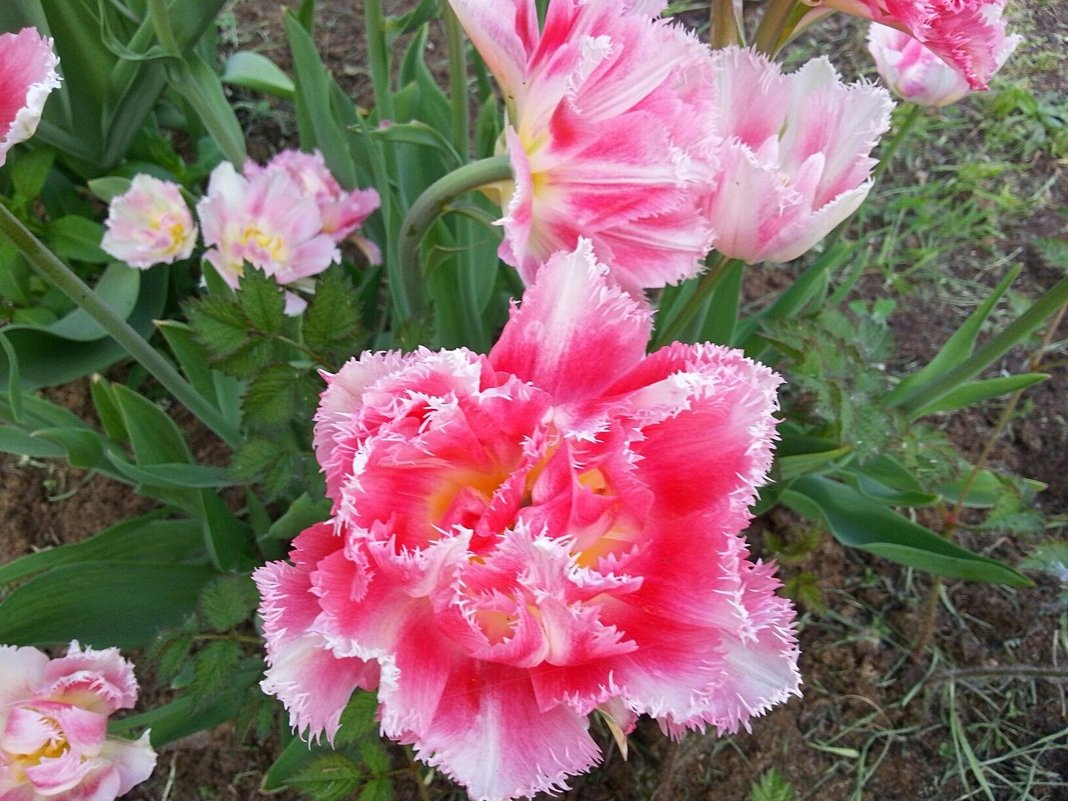 Ах, эти милые цветы ! - Наталья Владимировна