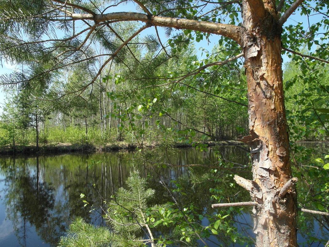 лесной водоем - Владимир