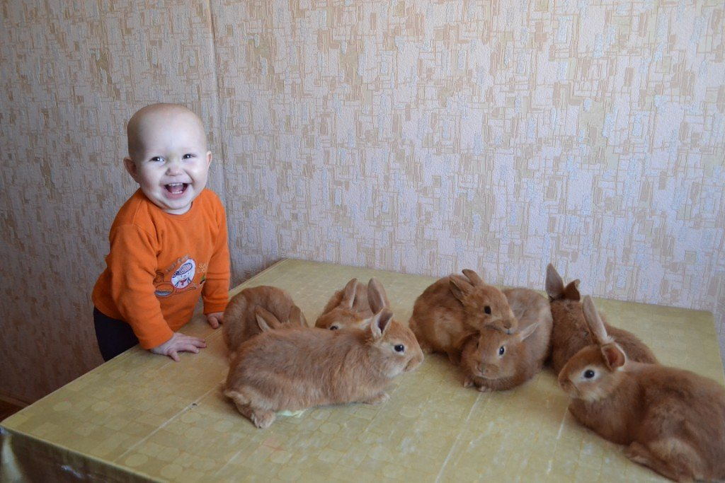 Внучок с крольчатами. - Елена Салтыкова(Прохорова)