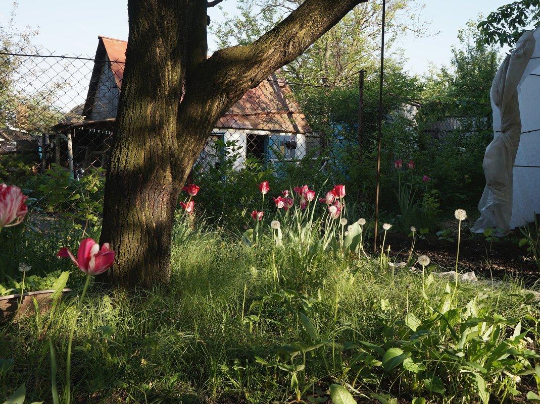 Майский вечер в саду - София