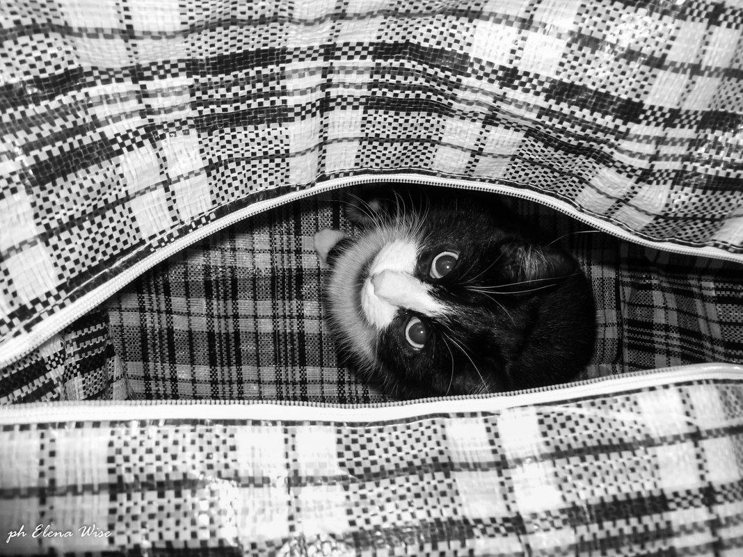 кот в мешке.. - Elena Wise