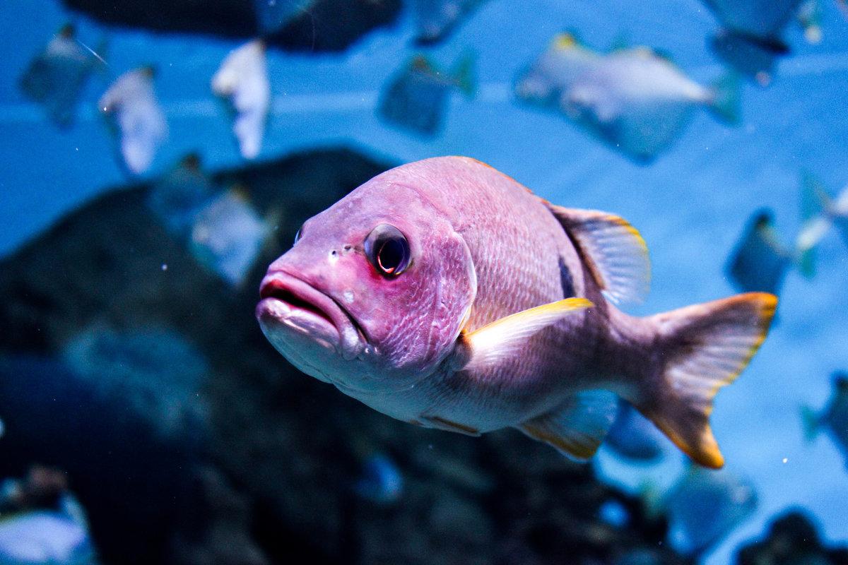 Рыбка - Мария