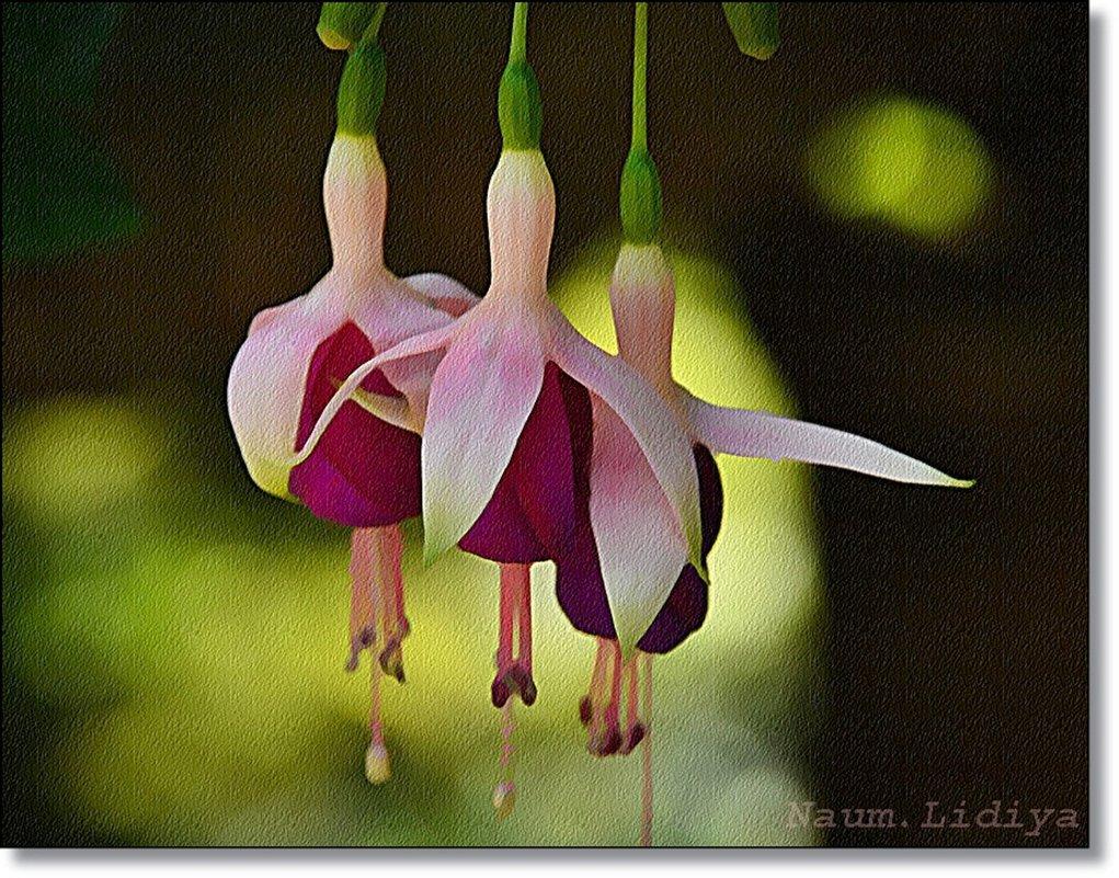 Балетный танец цветов - Лидия (naum.lidiya)