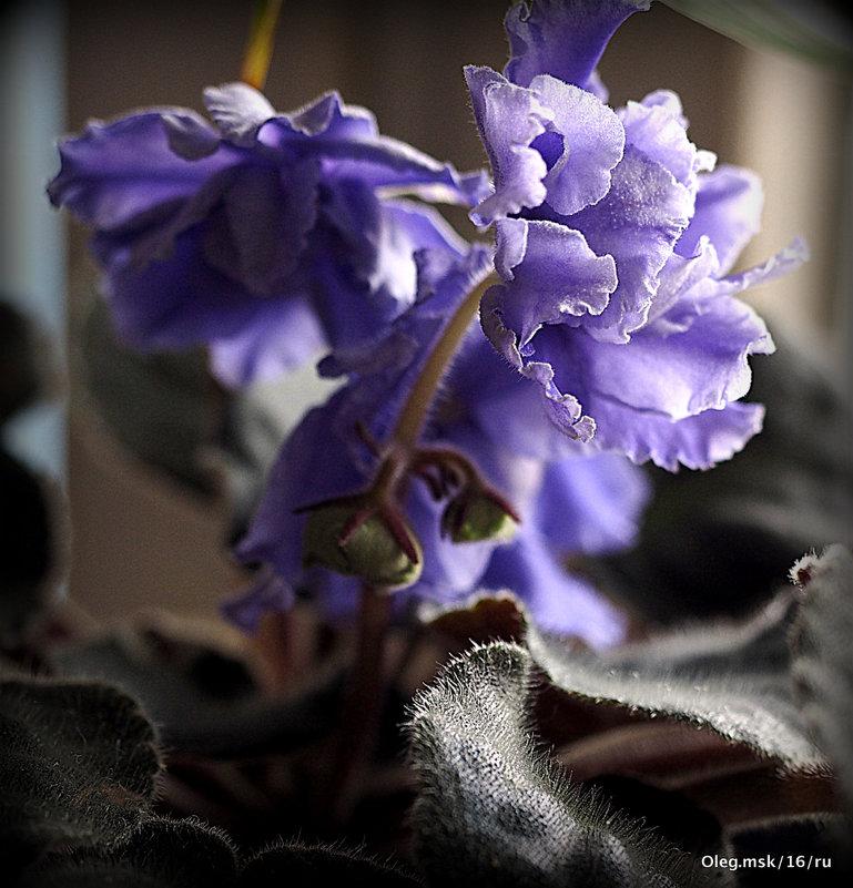 цветы на подоконнике - Олег Лукьянов