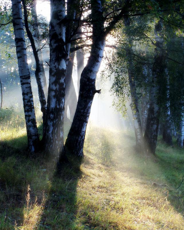 Утро в березняке......... - Юрий Цыплятников