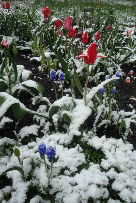 После майского снегопада - Галина Козлова