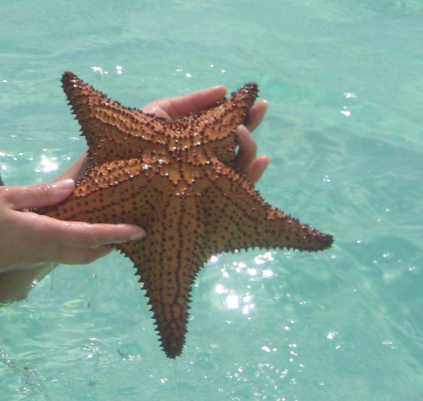 морская звезда - ИРЭН@ .