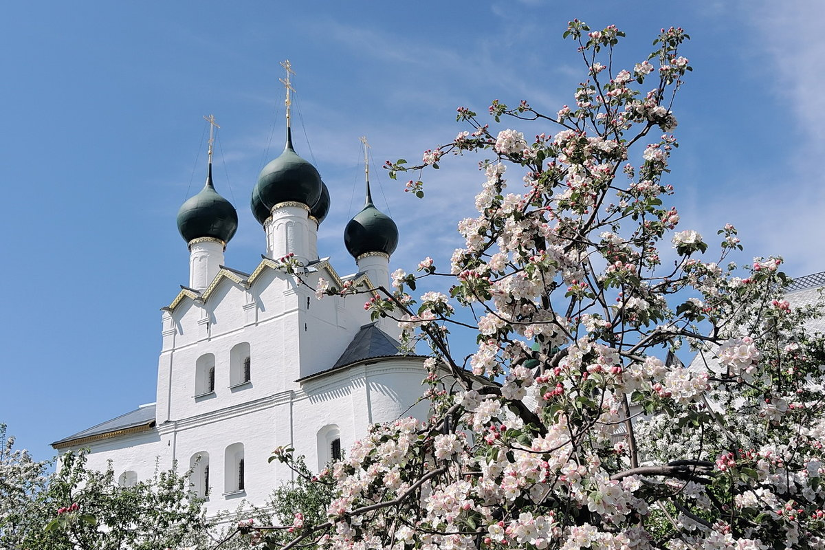 Сад Ростовского кремля, белоснежное цветение возле белых древних стен - Николай Белавин